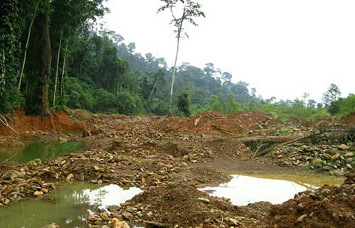 Oda Forest Reserve in Ghana's Eastern Region currently being threatened by illegal and galamsey miners.
