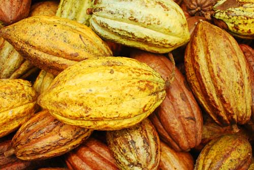 Ghana has not failed to secure a buyer for its 2020/21 cocoa beans – COCOBOD