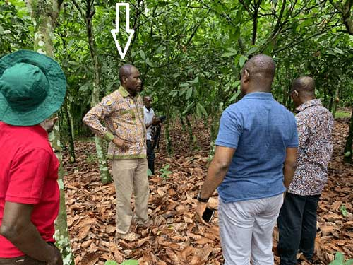 COCOBOD CEO alarmed over destruction of cocoa farms. Image credit - graphiconline