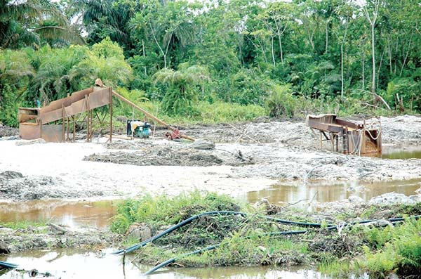 A cocoa farm near River Awusu in Kwabeng (Atiwa) in the Ashanti Region totally destroyed by illegal miners.