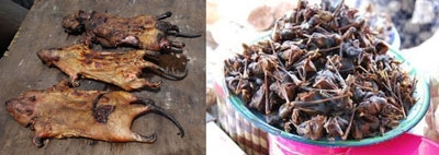 Health authorities/agencies Warns of Ebola Danger through Consumption of Wildlife Species including Bush Meat & Fruit Bats